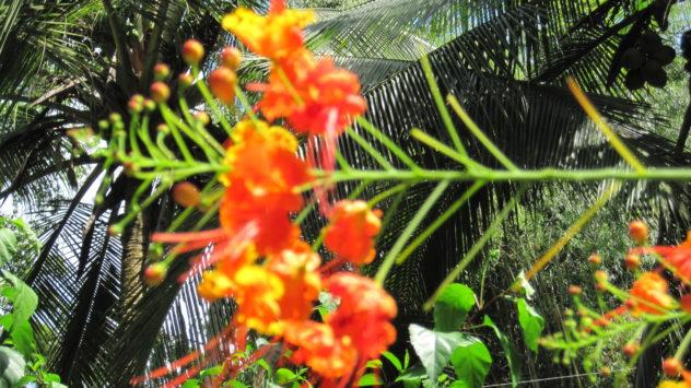 Workshop Costa Rica